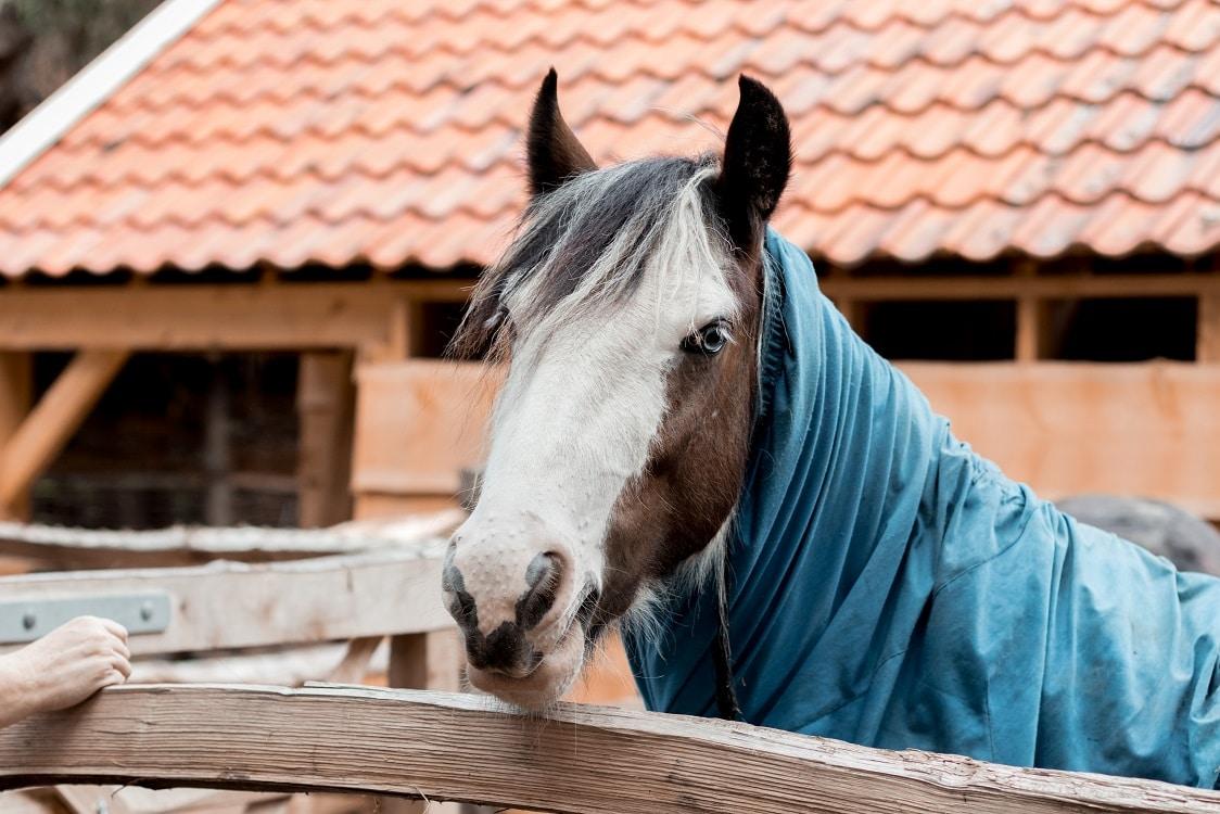 zo ziet ene paard eruit